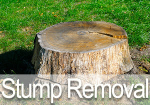 OKC Stump Removal
