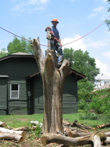 Tree Surgeon OKC 2